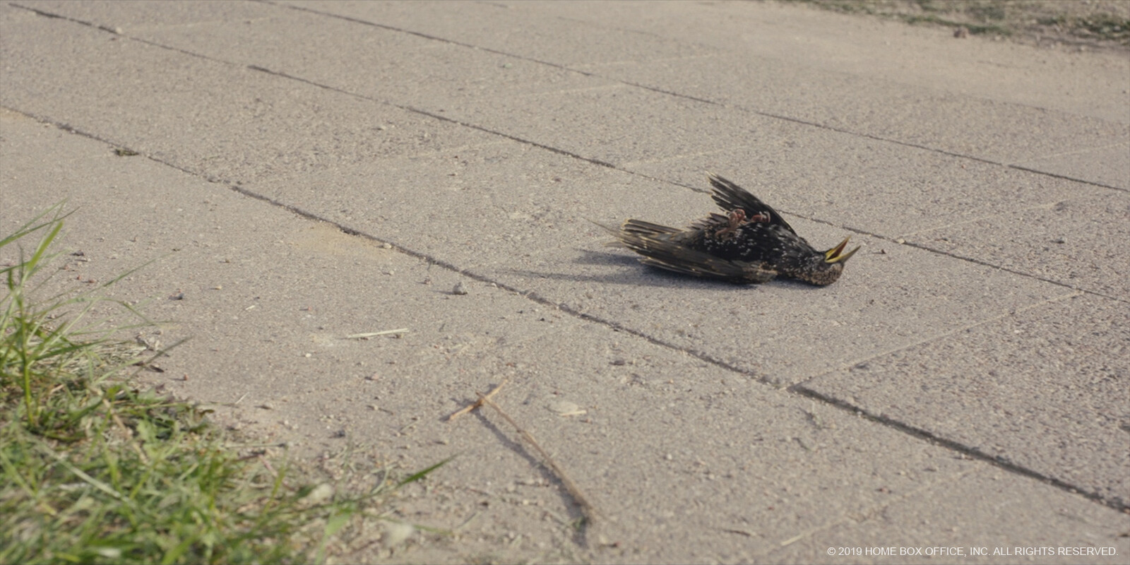 Dying starling - lookdev, lighting