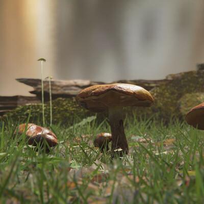 Cedric lecomte mushroom 02