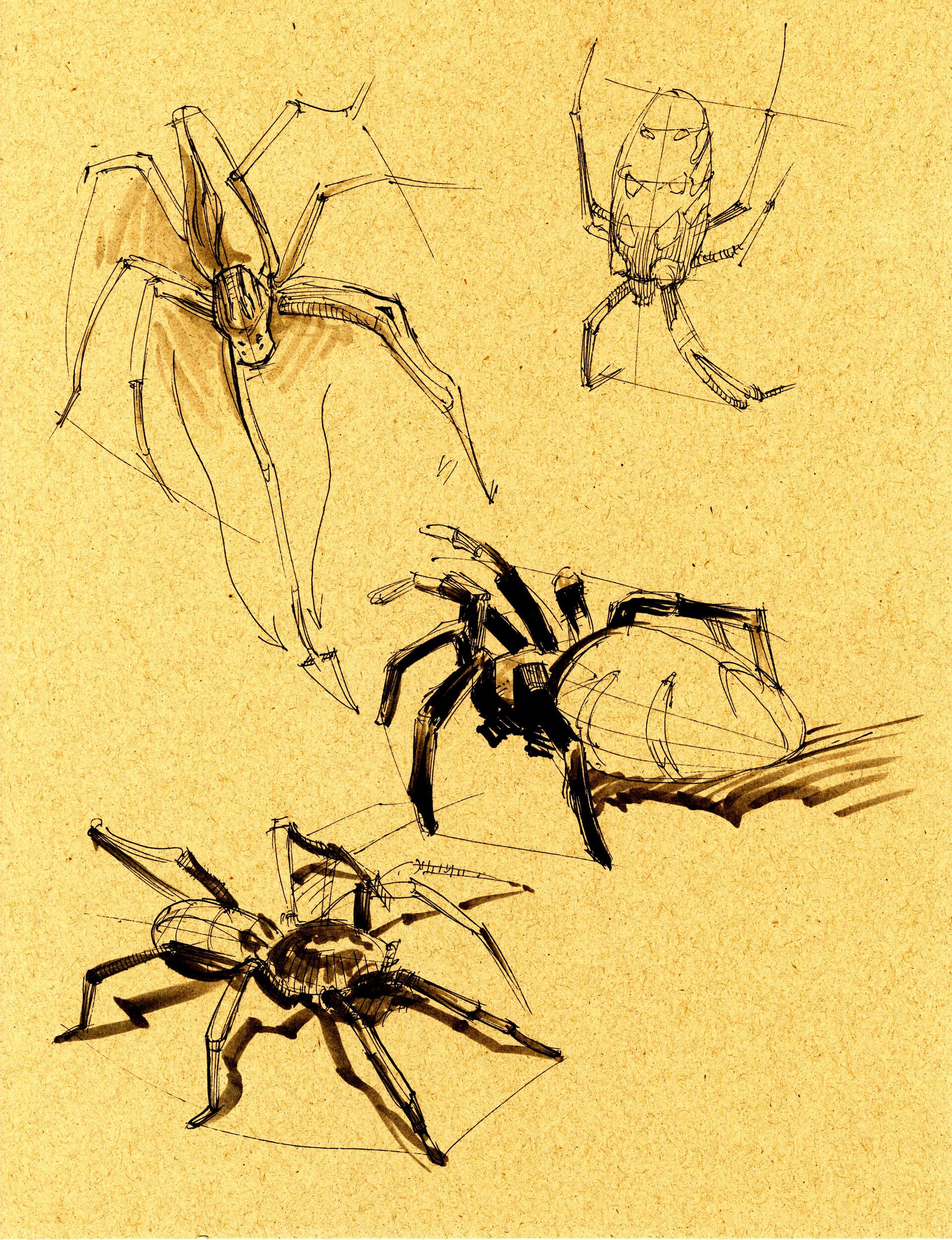 Drake truber arachnid4