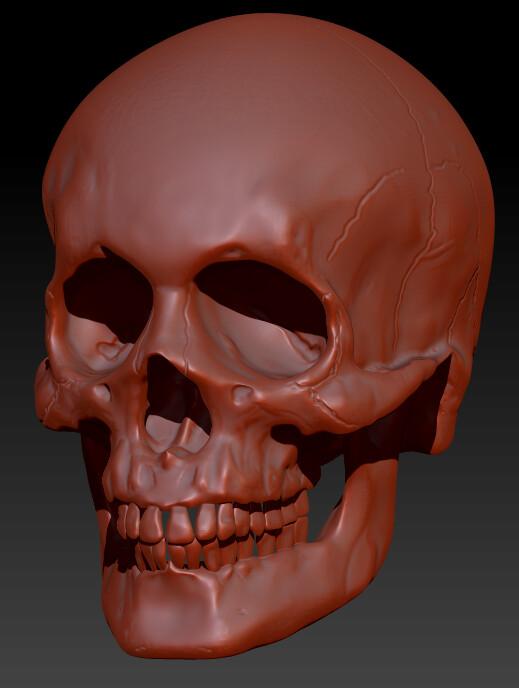 Skull Sculpt Zbrush