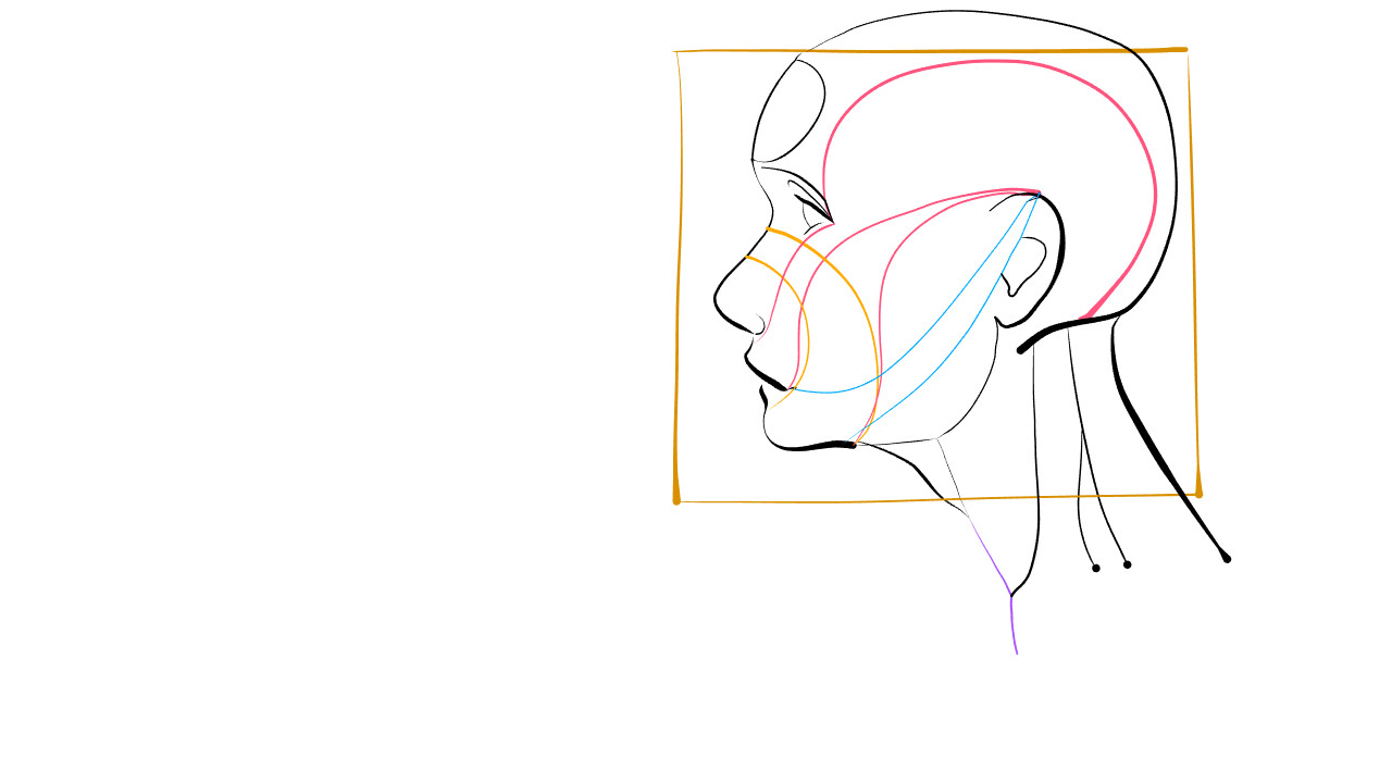 Adapting Reilley Head Drawing Method to Vector Illustration and Semi-Procedural Art Creation