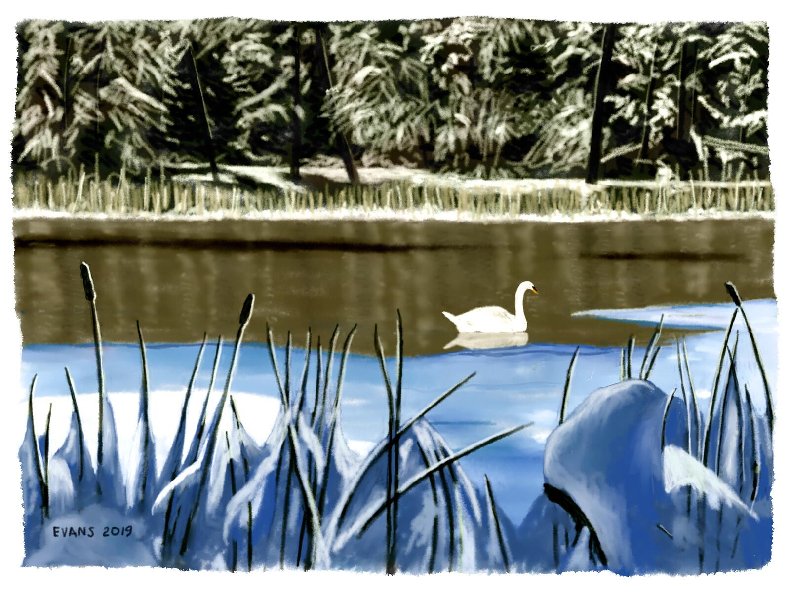 Winter Swan 2019