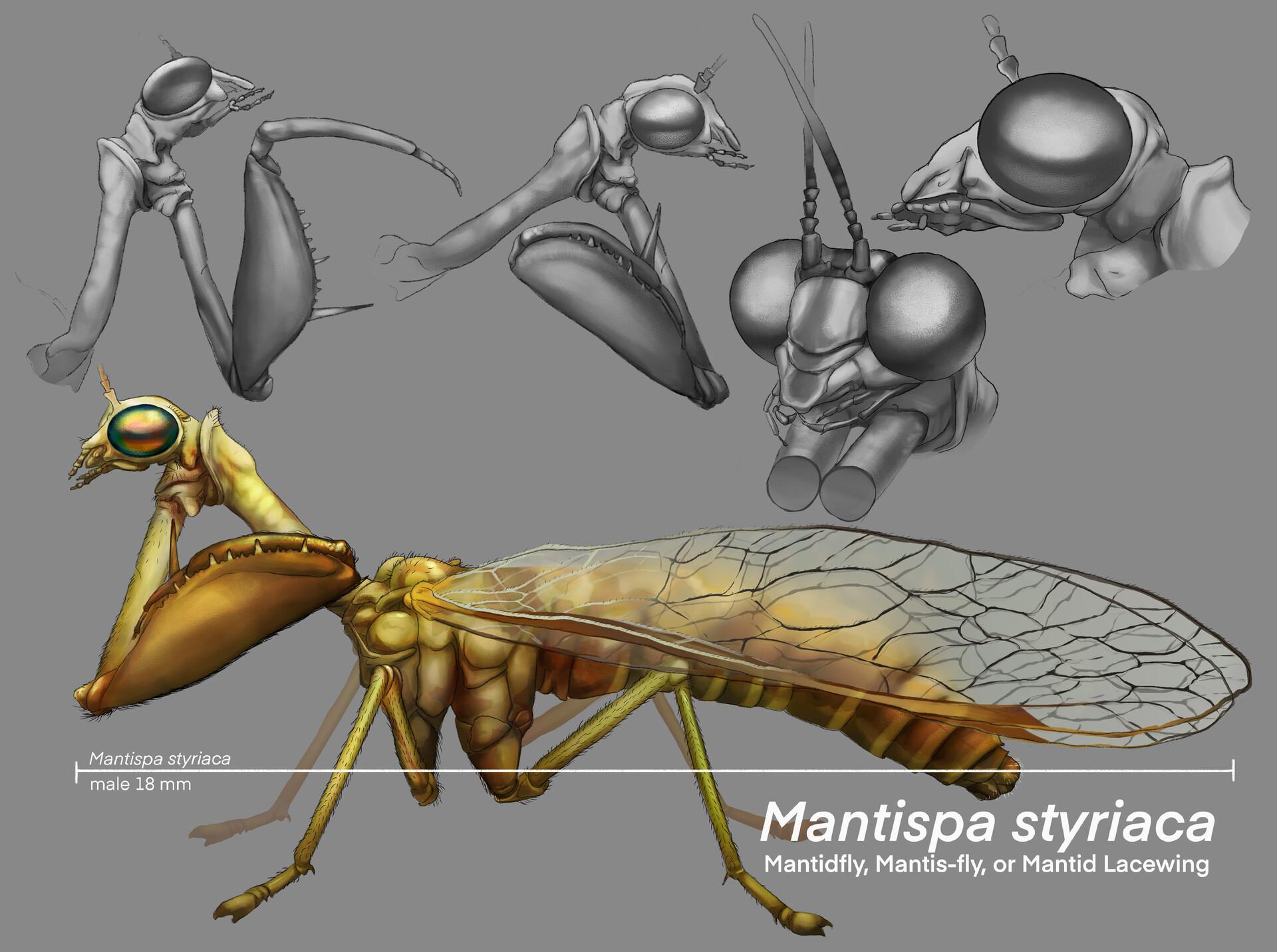 Jacie dannhardt mantidfly black and white