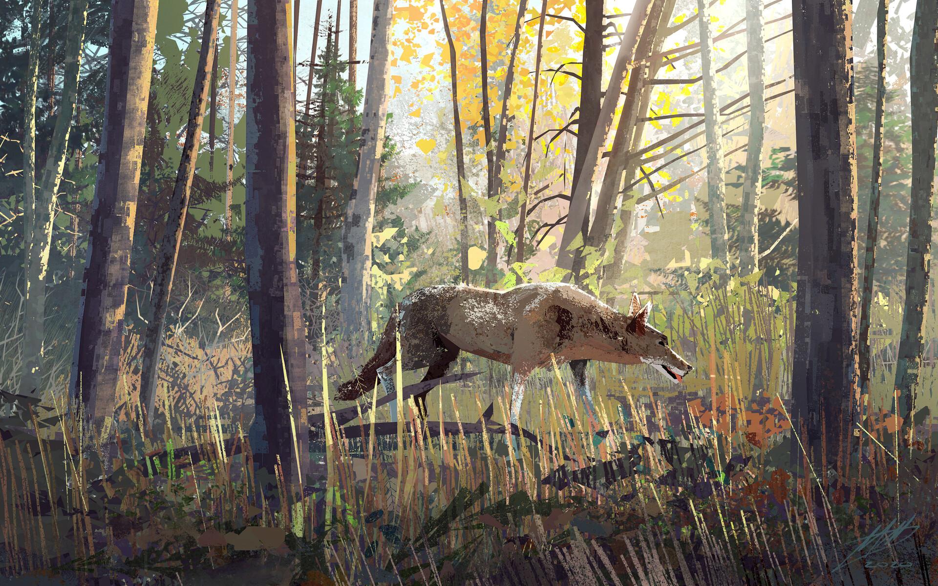 Mike mccain coyote