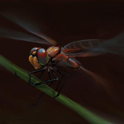 Ilda baof dragonfly crop 2