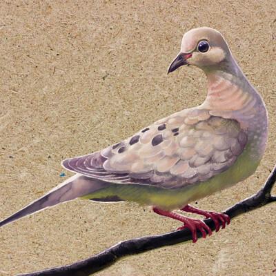 Javier valdez mourning dove