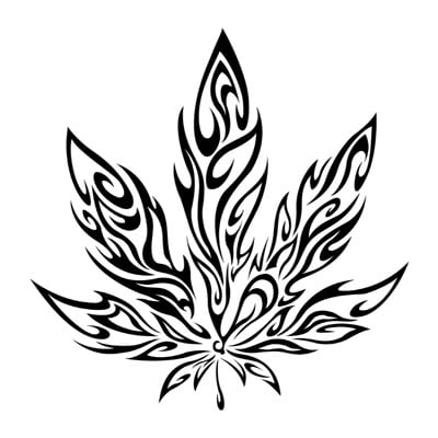 David blomo marijuana