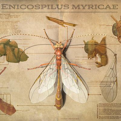Mieke roth enicospilus myricae artstation challenge