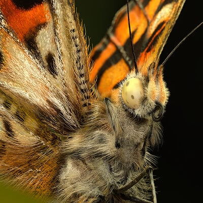 Eric keller keller butterfly im 01