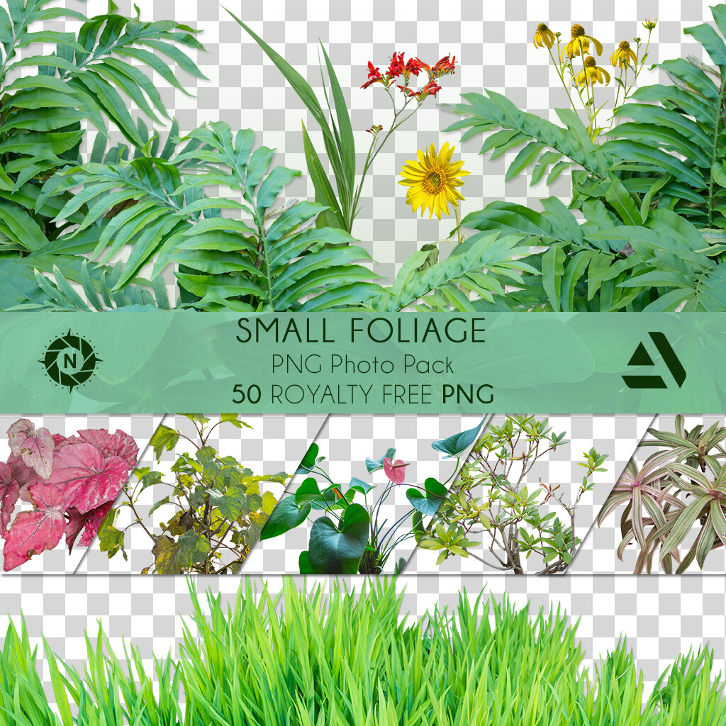 PNG Photo Pack: Small Foliage  https://www.artstation.com/a/165744