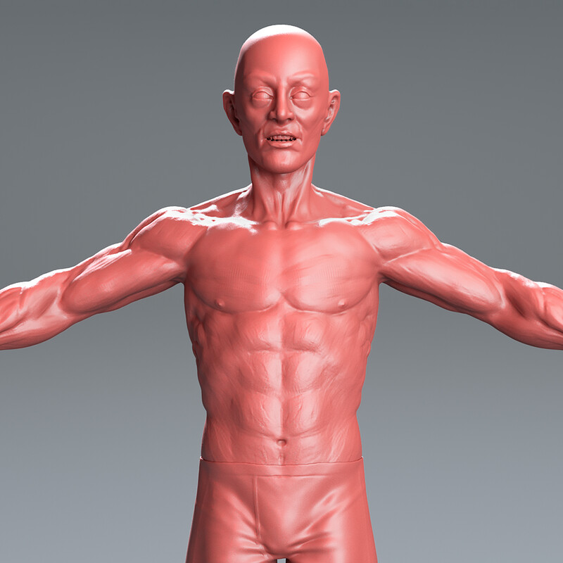 Male Sculpt - Anatomy Study