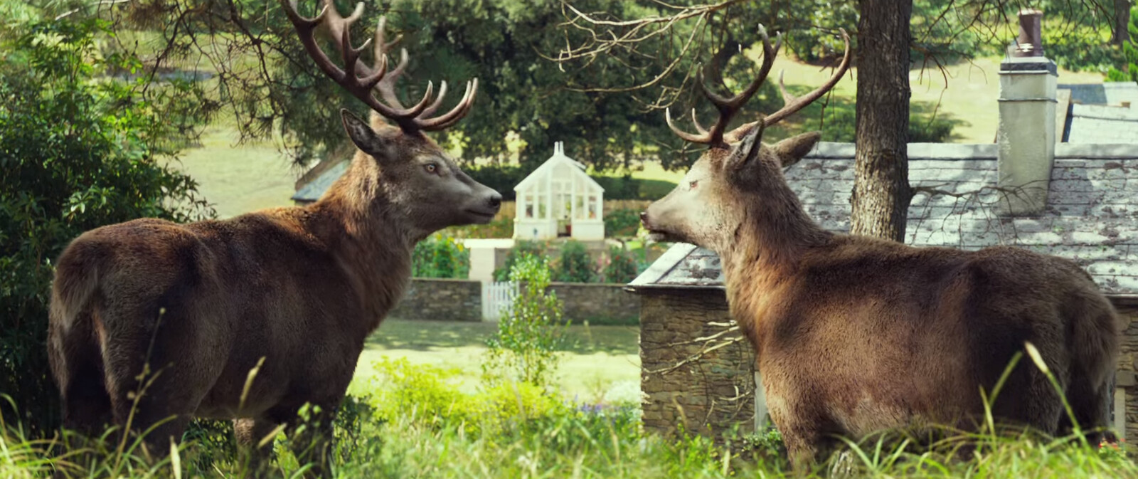 Deer from the film Peter Rabbit (model only).