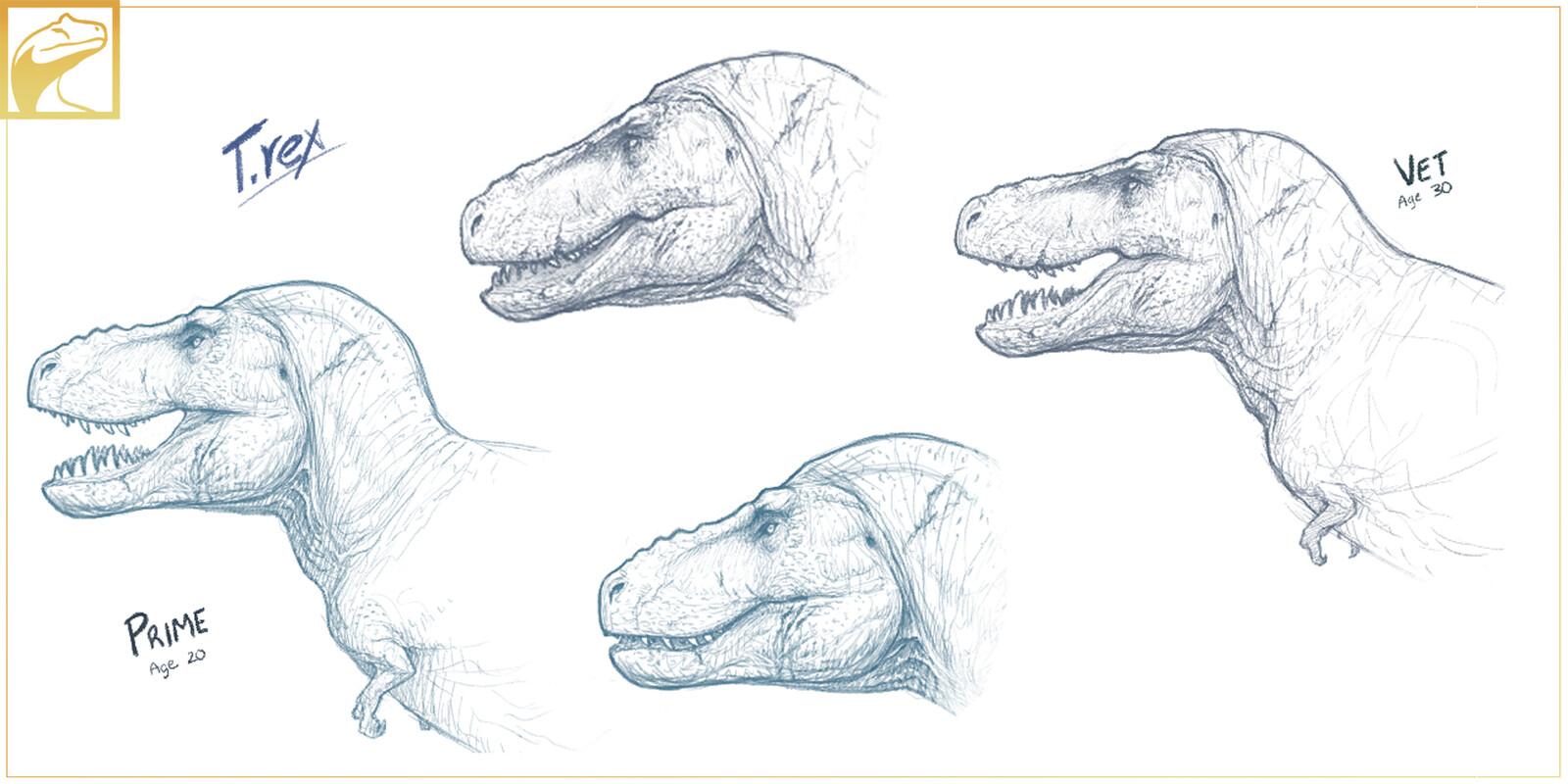 Tyrannosaurus Adults