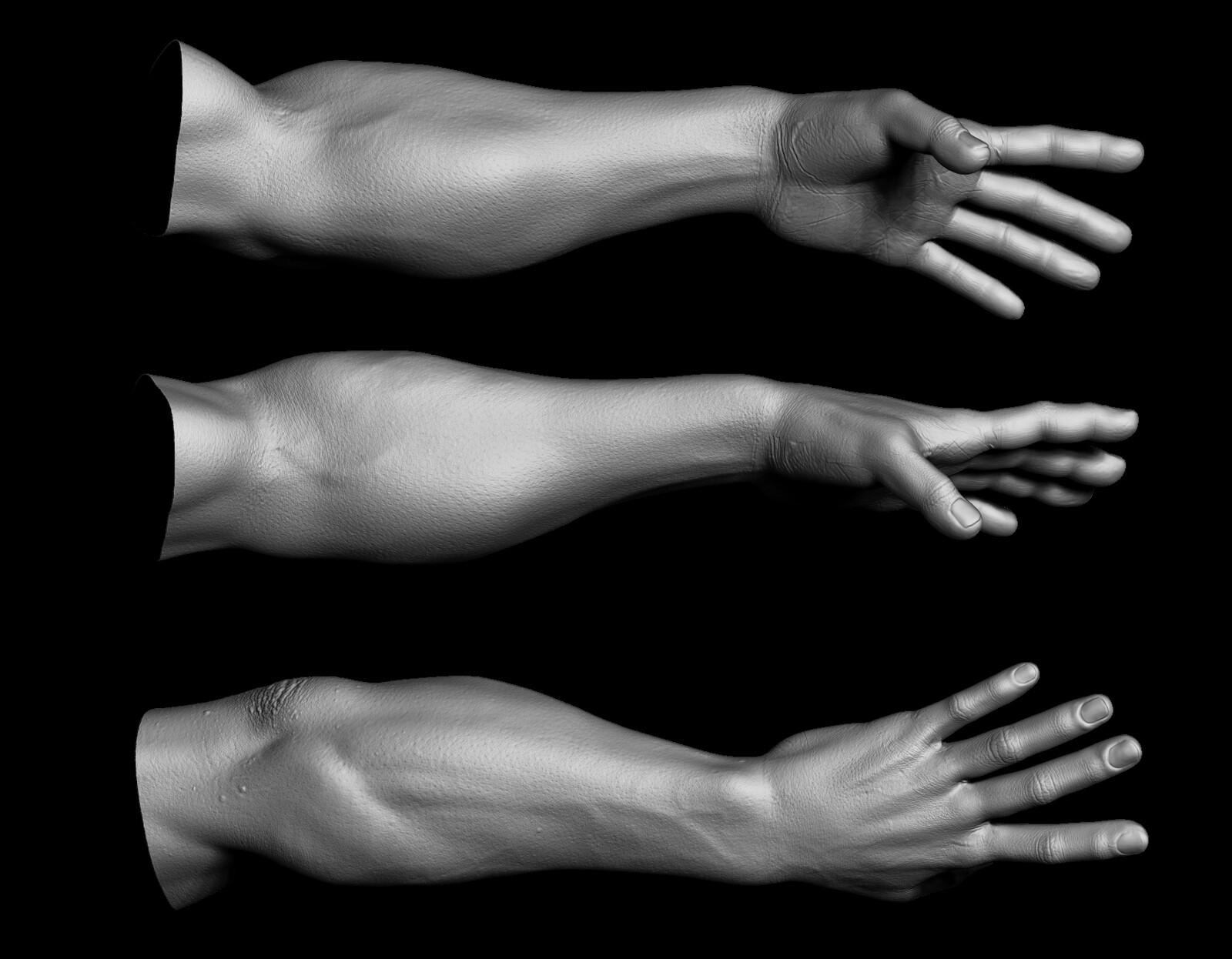 High res sculpt of the arm