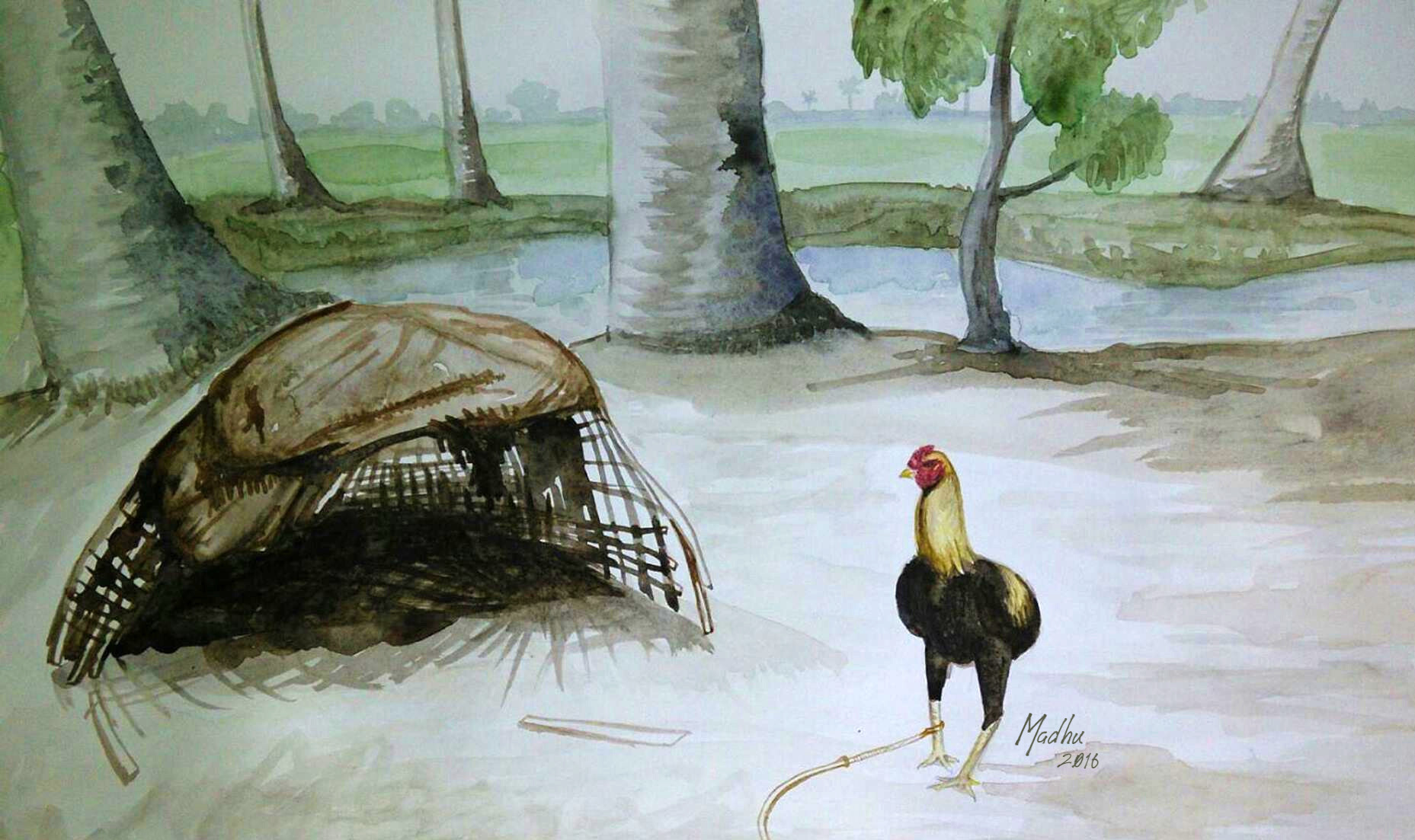 Cock - Water colors on paper