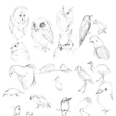 Hannah sayre sketchbook 2020 birds