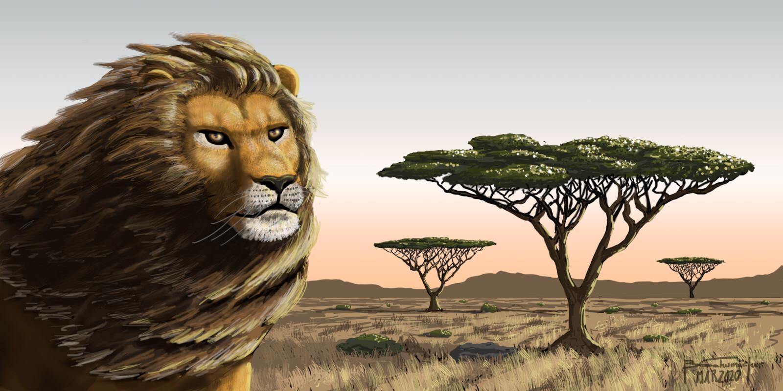 Lion and Acacia