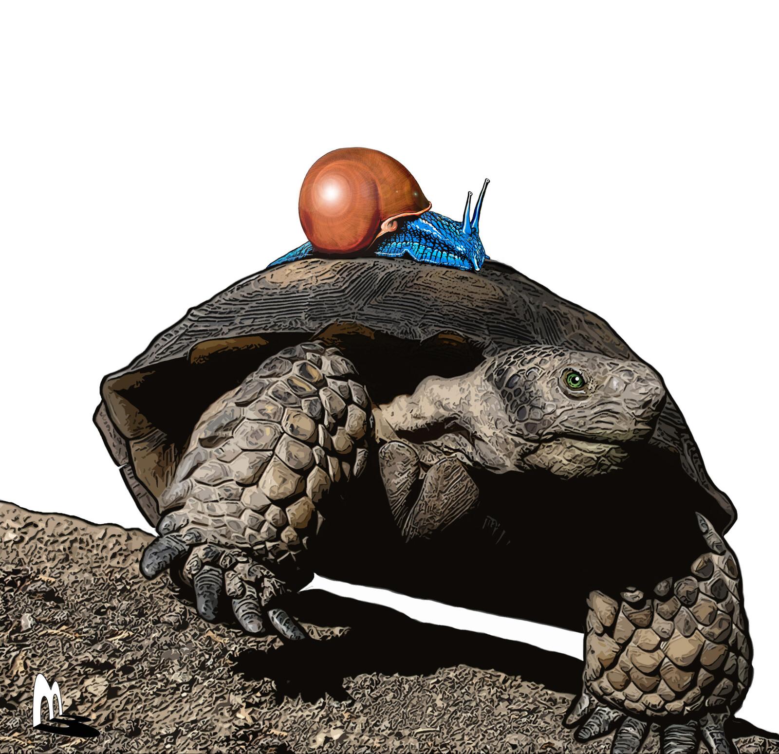 Snail riding a Turtle