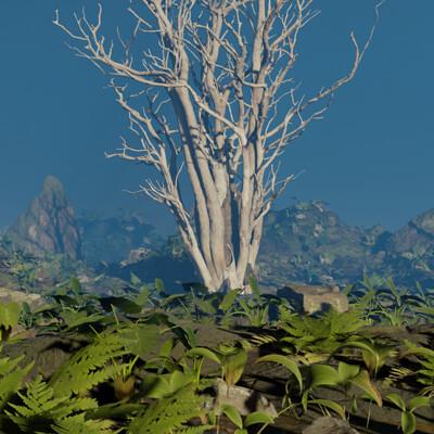 Taha yeasin old tree ss2