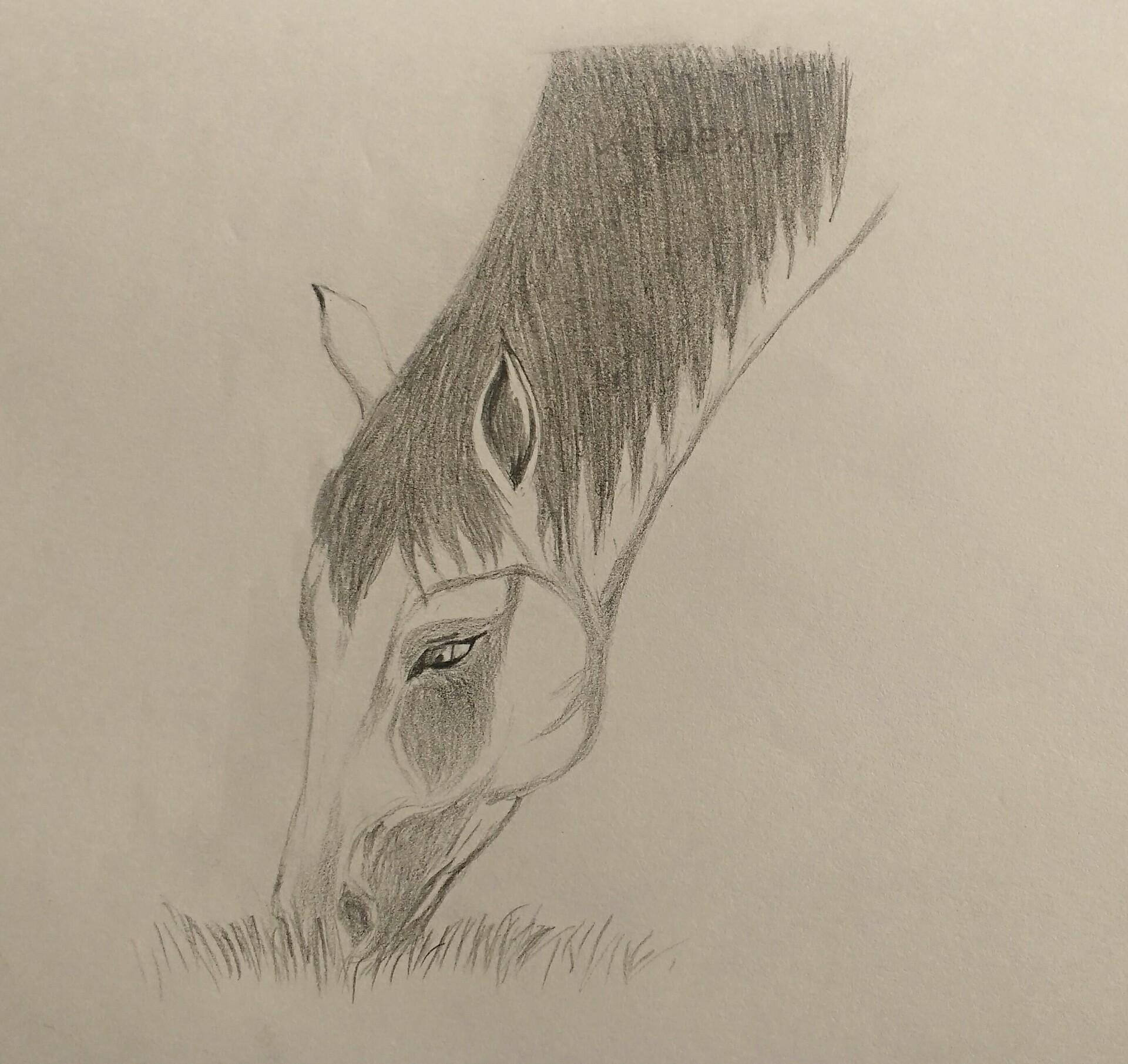 Artstation Pencil Sketch Horse Head 1 Artoex 07