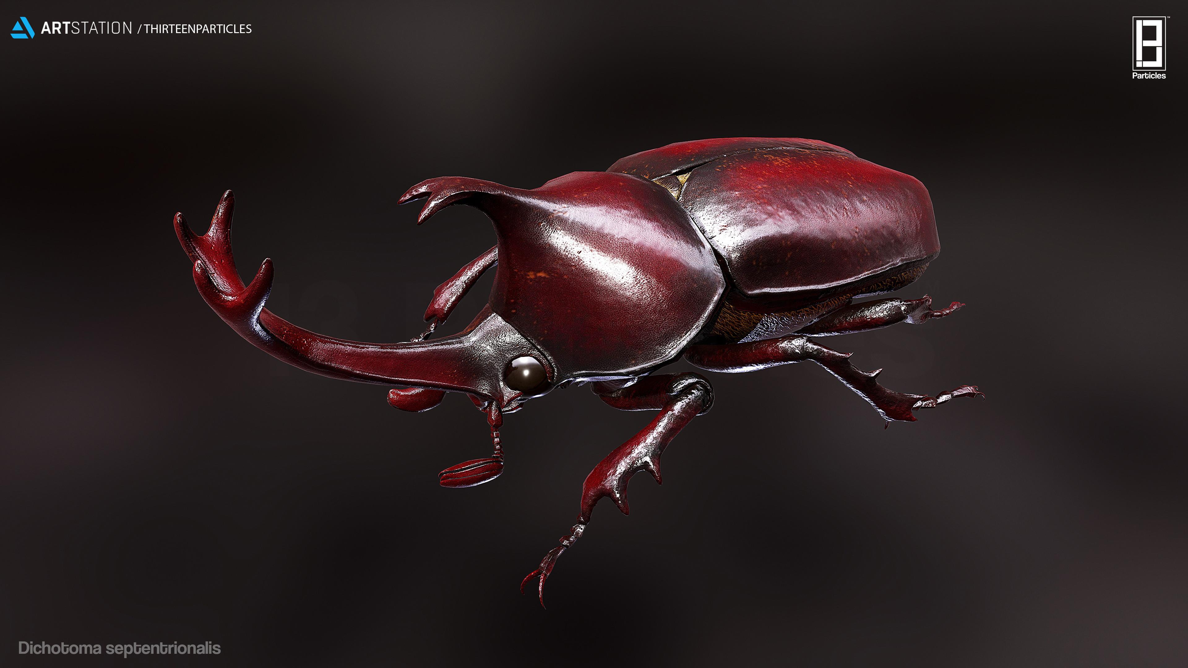 Dichotoma septentrionalis