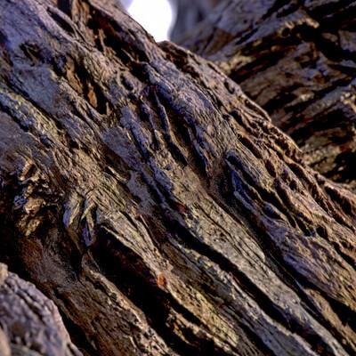Pete mc nally petemcnally barkbranch01