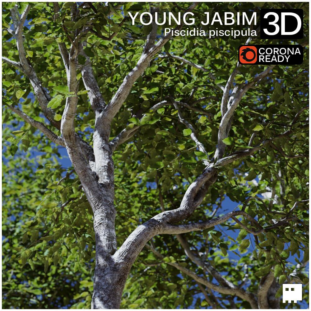 Young Jabim 3D Asset
