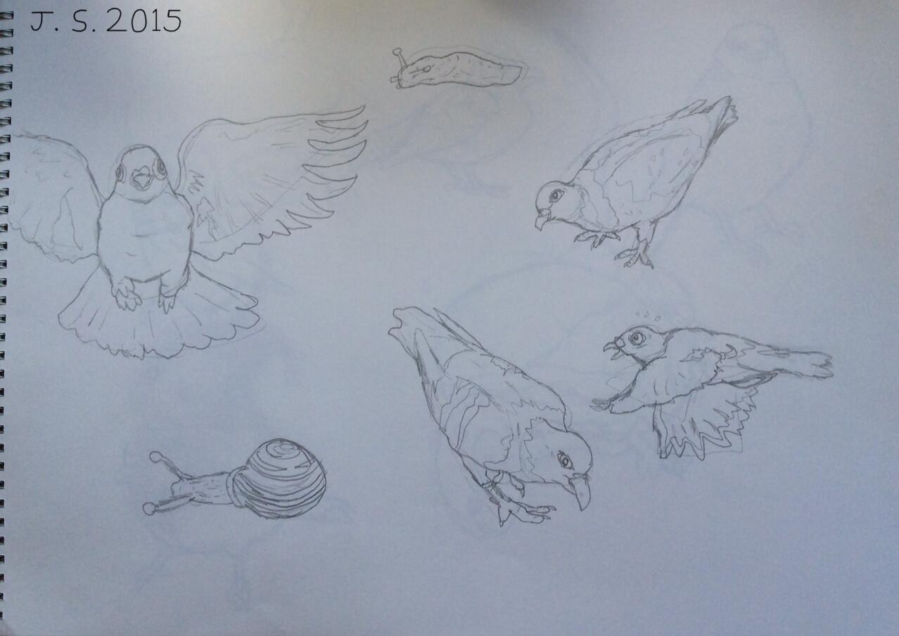Pigeons, Snail and Slug