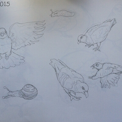 James skinner pigeon drawings high quality