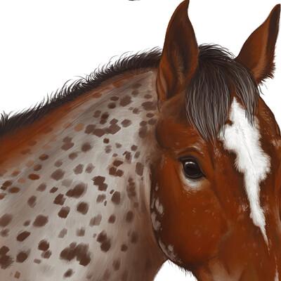 Meagen ruttan foal faces 004