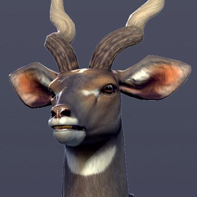 Sarah kisor kudu beauty 01