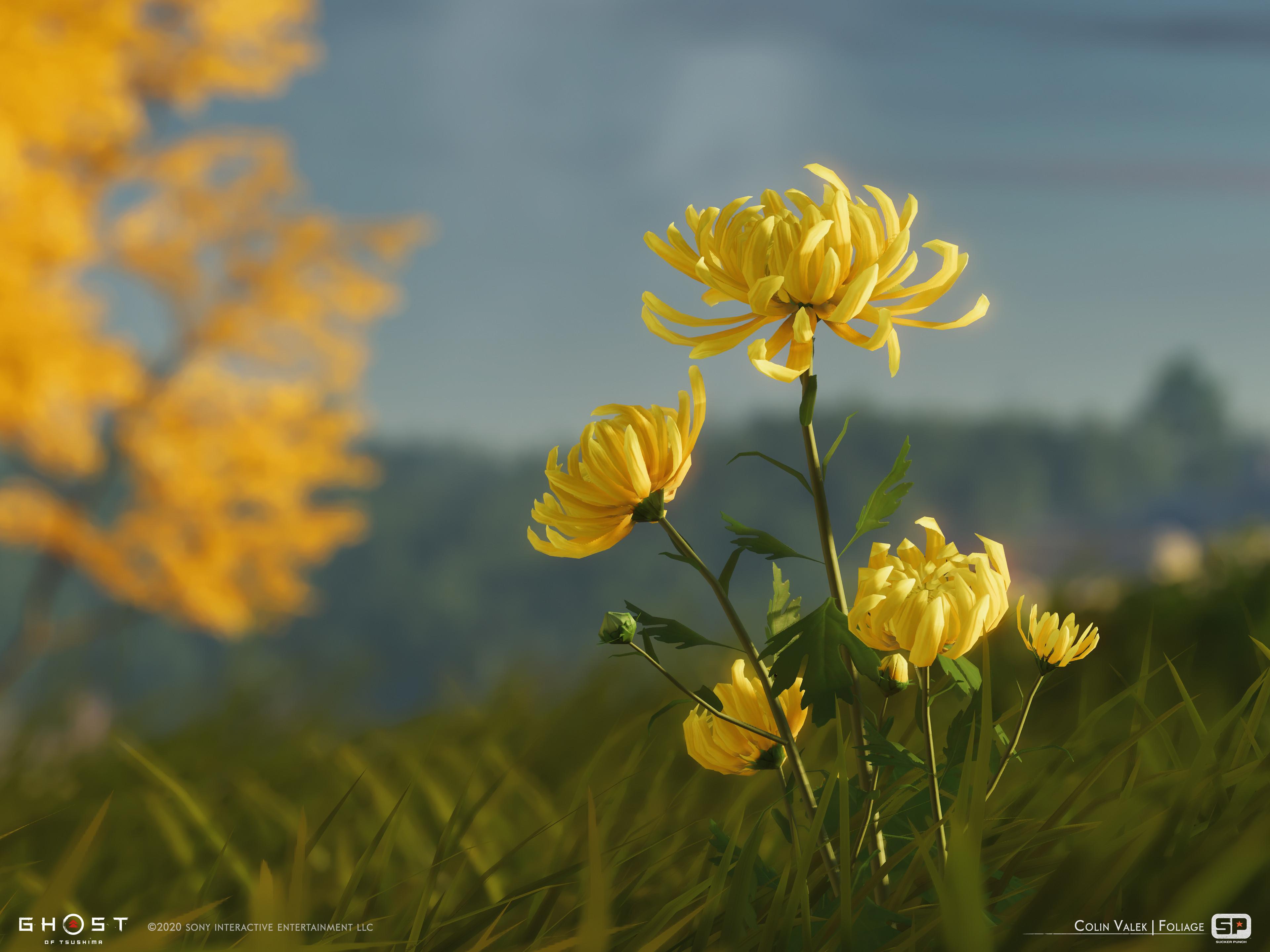 Yellow Chrysanthemum dye flower