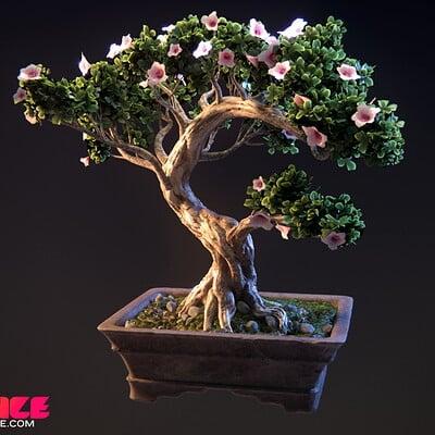 Brian prince bonsai arnoldrender b