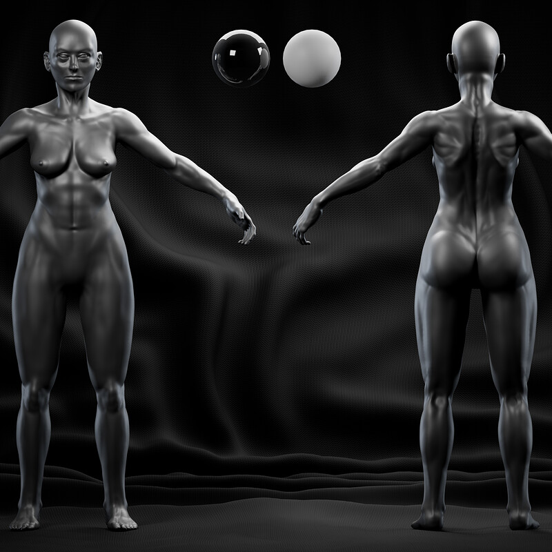 Female Anatomy Study