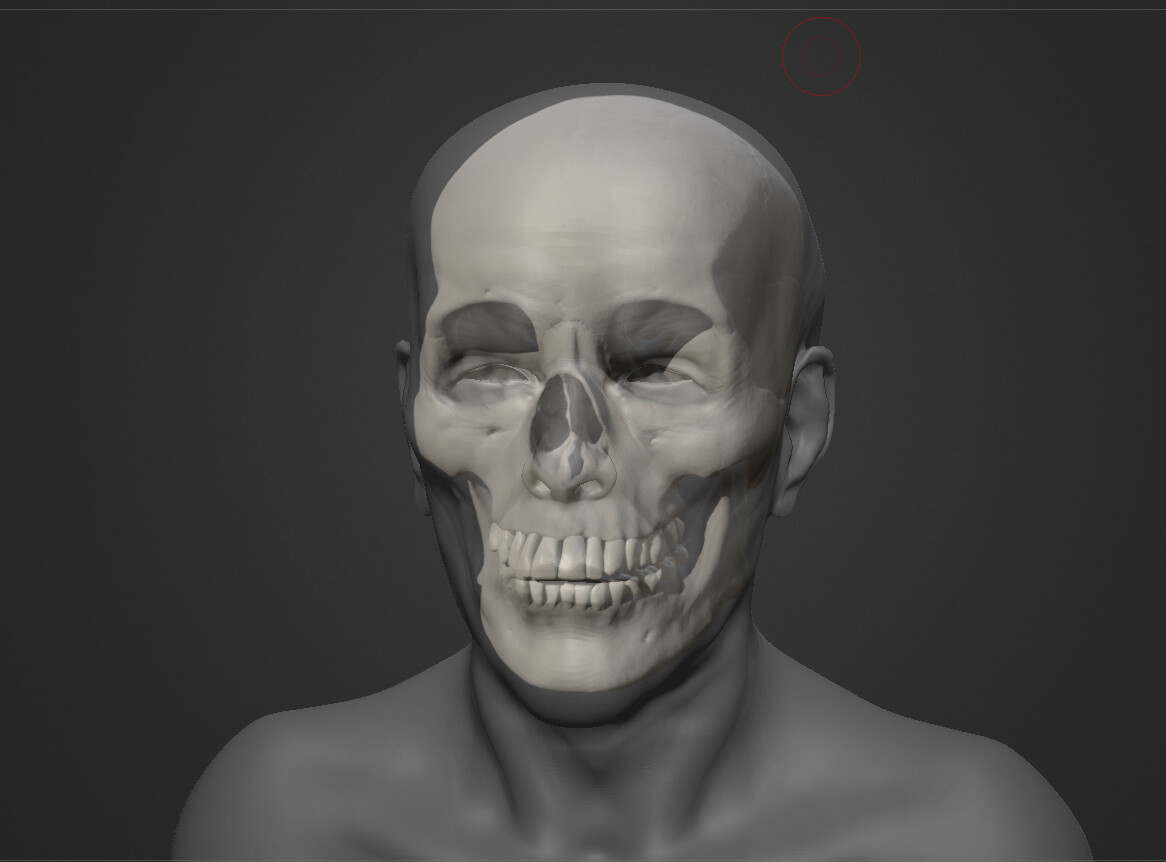 Atewr using the skull as a reference I started to find more easily the forms