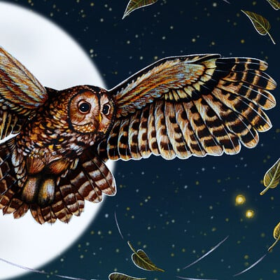 Samantha josephine burrow tawny owl in the night sky