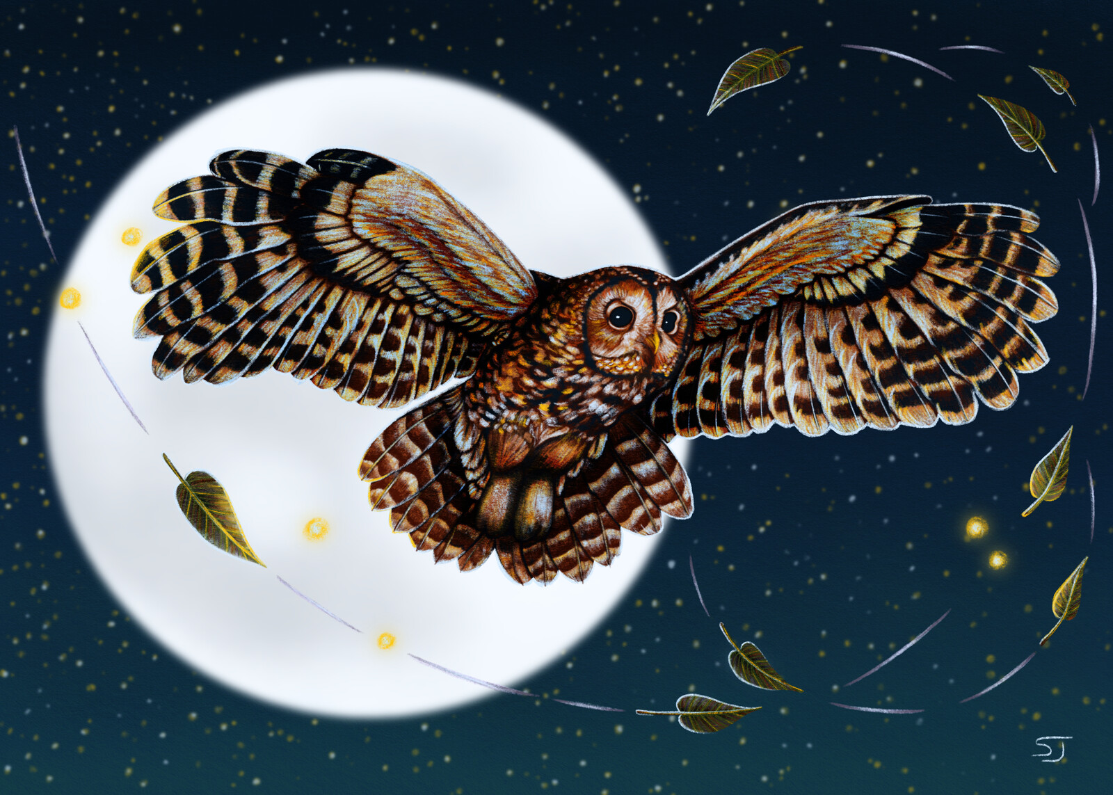 Tawny Owl in the Night Sky