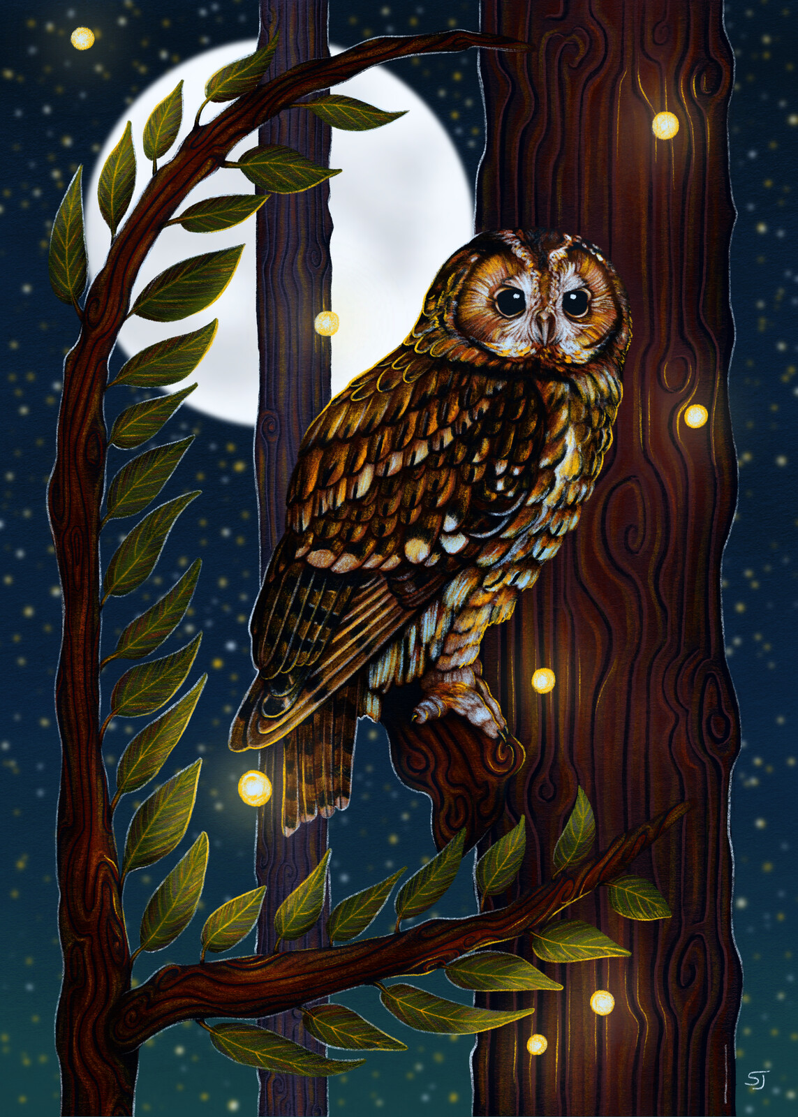 Tawny Owl Moonlit Perch