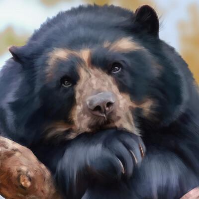 Irem erbilir irem erbilir bear