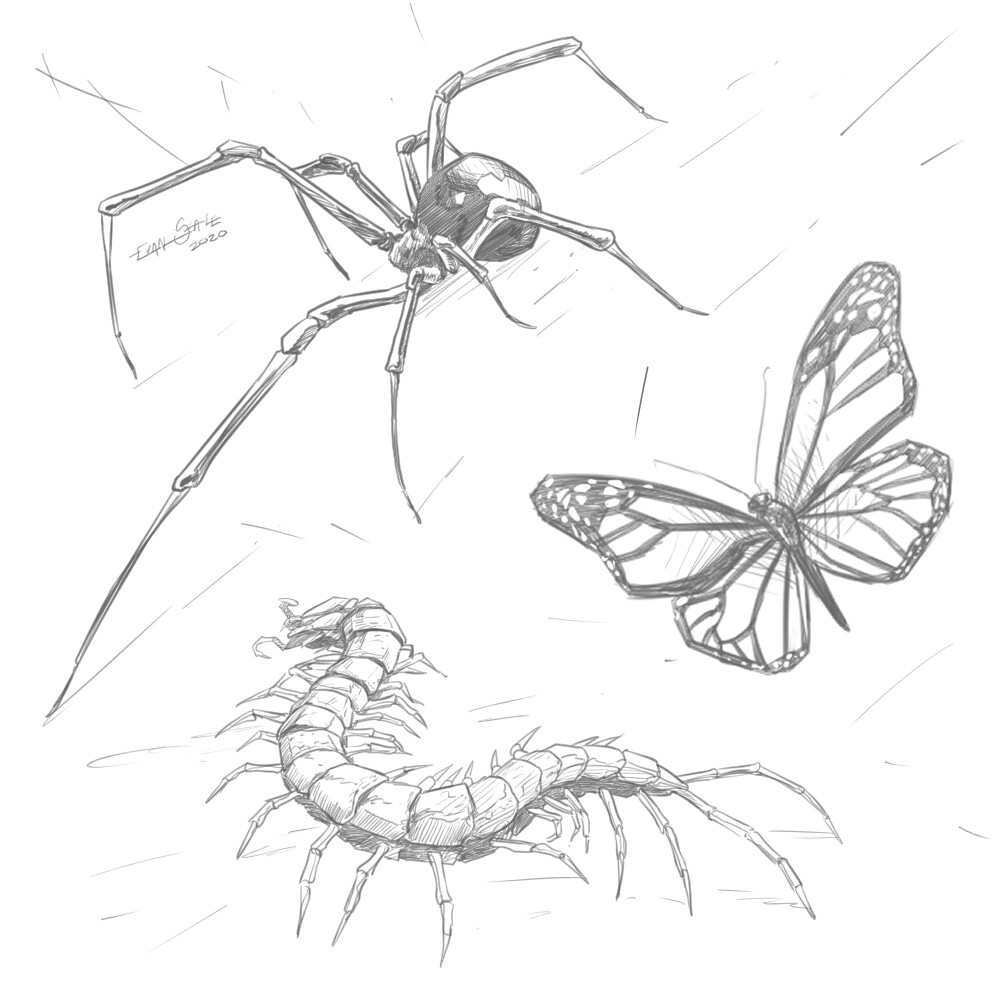 Insects/Bugs #2