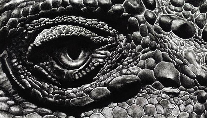 Lighting Study of an Iguana Eye Graphite on Paper 9.5 x 5.5 in (24 x 14 cm)