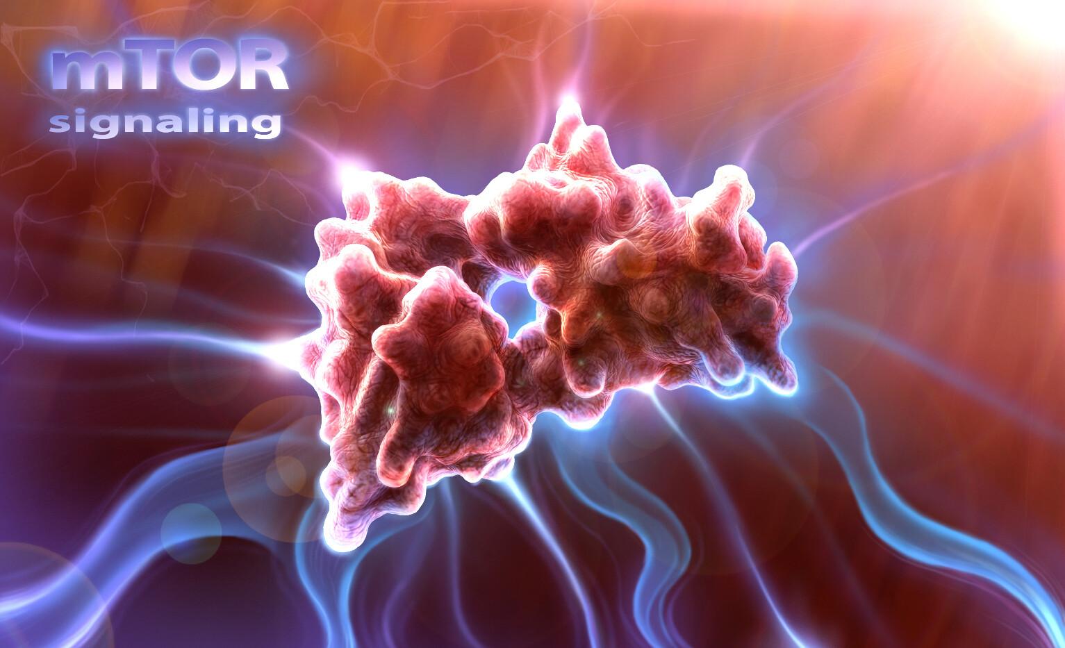 mTor Signaling: cancer pathway