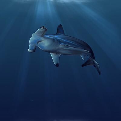 Miguel pino munar tiburon martillo 1