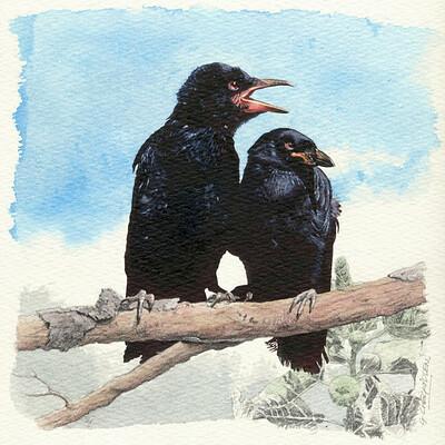 Graeme chegwidden ravens