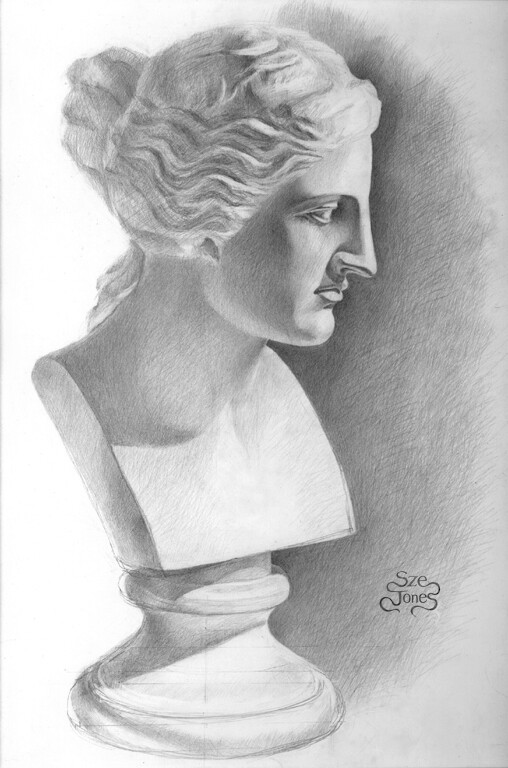 Venus Bust - Cast Drawing