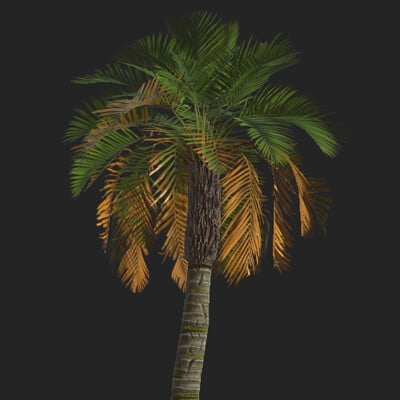 Joel savell datepalm 005