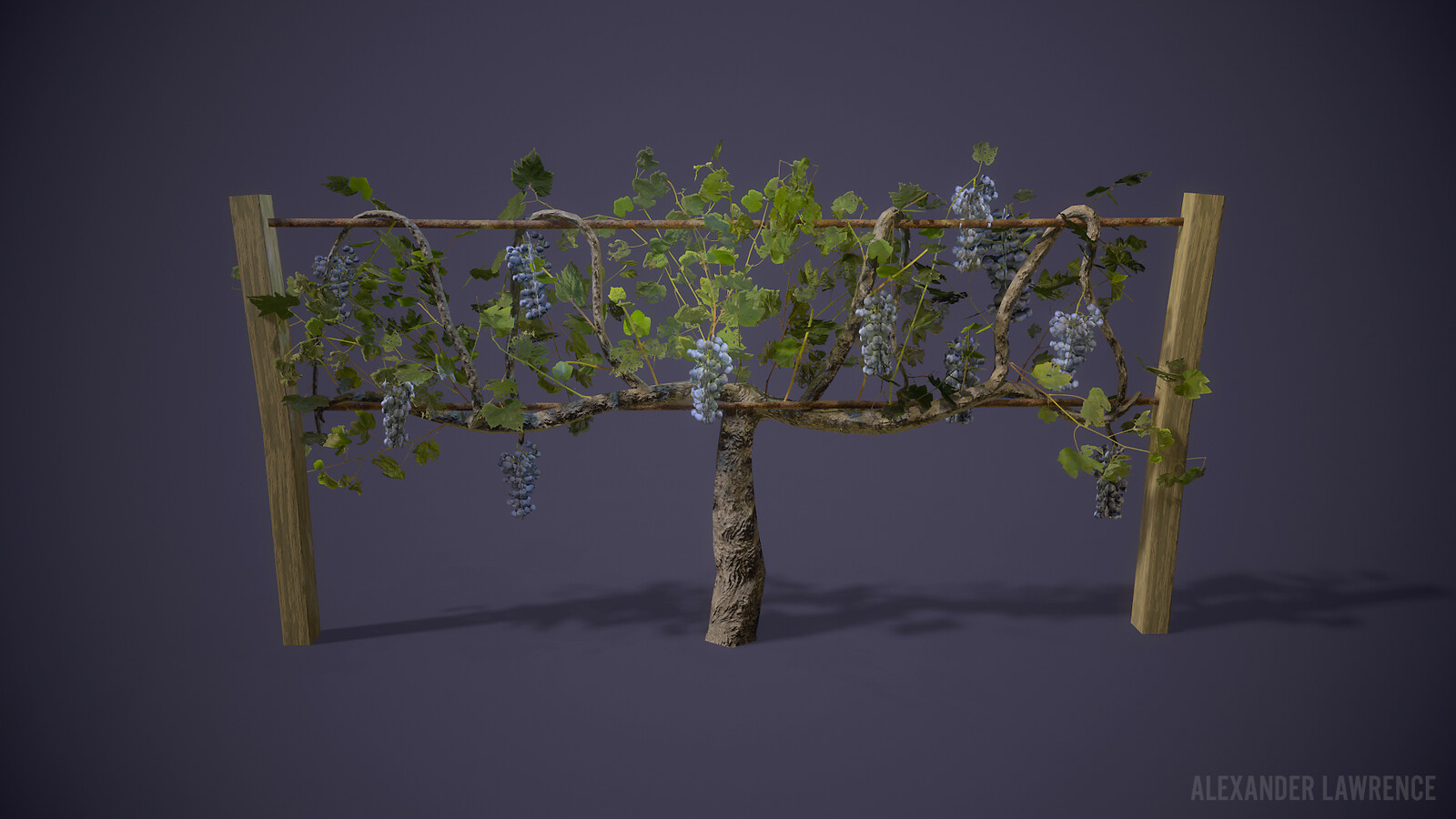 This grapevine was in the original version of this map. I had placed a vineyard near the ramp, but it was taken out in the final version for optimization reasons.