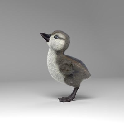 Sundos alriffi duck render01