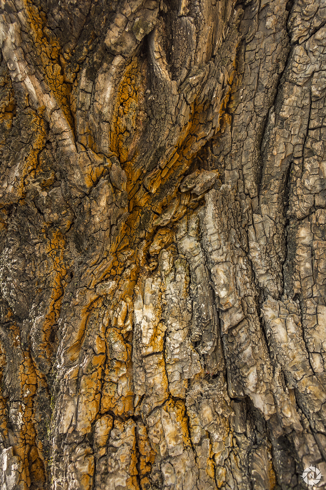 From the Texture Photo Pack: Tree Barks Volume 2  https://www.artstation.com/a/165736