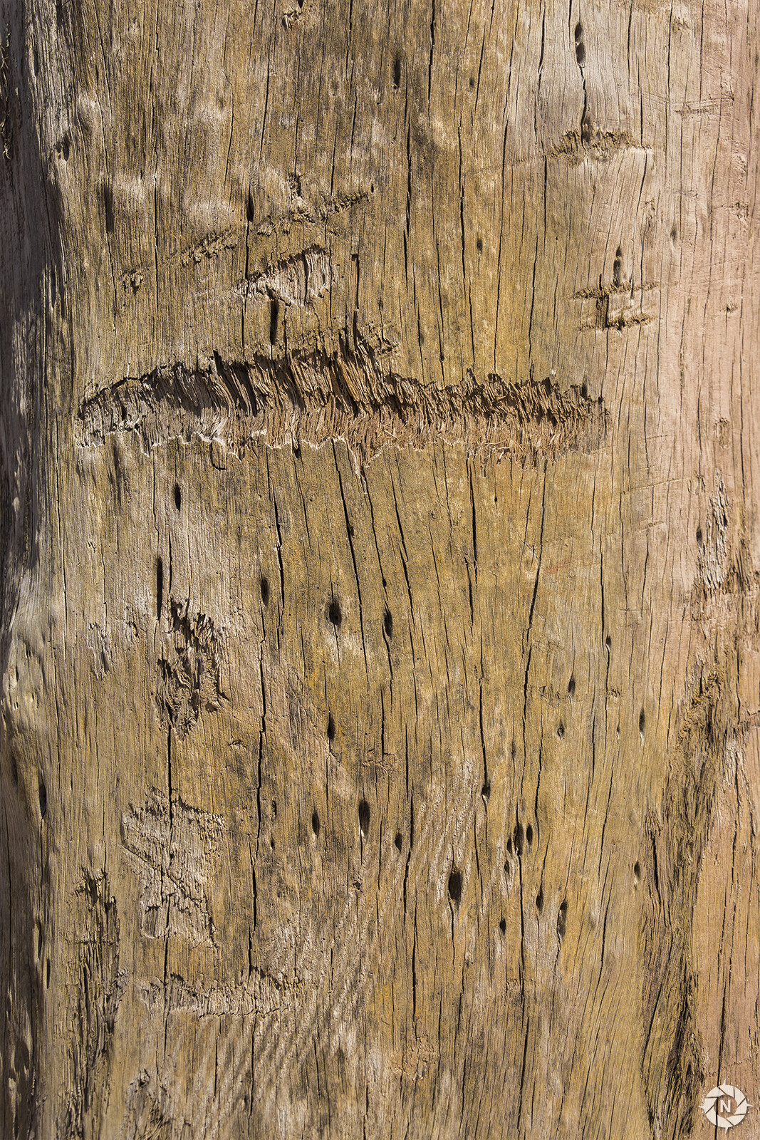 From the Texture Photo Pack: Tree Barks Volume 3  https://www.artstation.com/a/165833